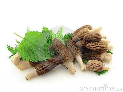 Morels and nettles