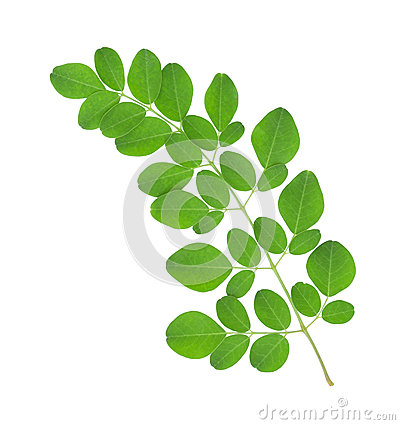 how to prepare malunggay leaves