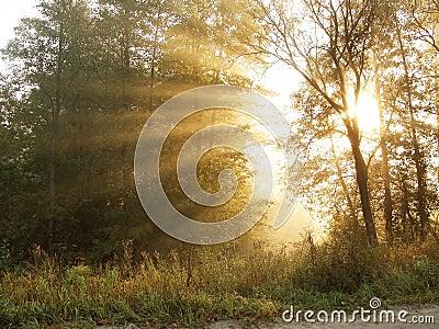 Morning beams