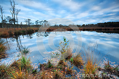 Morning blue sky reflected in wild lake