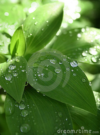 Free Morning Dew Royalty Free Stock Images - 485459