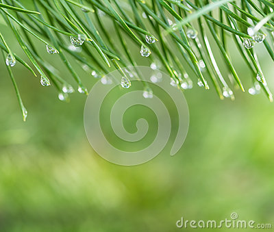 Morning dew nature background