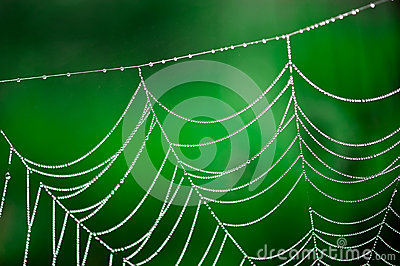 Morning dew. Shining water drops on spiderweb