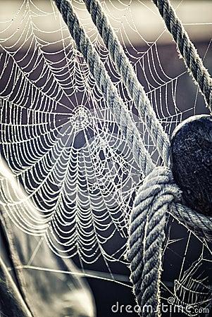Morning dew on Spiderweb sailboat detail