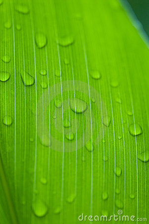 Free Morning Dews On Tropical Flowers Stock Images - 4561834