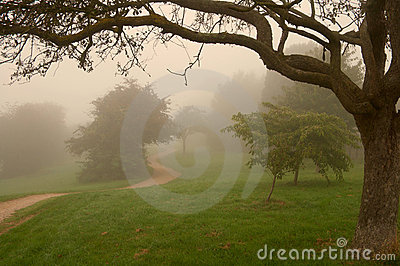 Morning english fog in a park, warm light