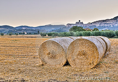 Morning fields and Basilica of St. Francis
