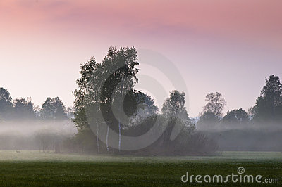 Morning fog on open field