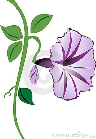 Free Morning Glory Flower In Purple Stock Photos - 5830243