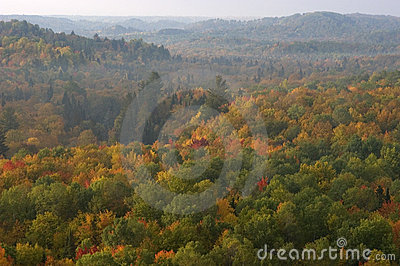 Morning Haze Over Forest of Fall Colors