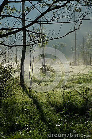 Morning Haze of Tashiro Wetland
