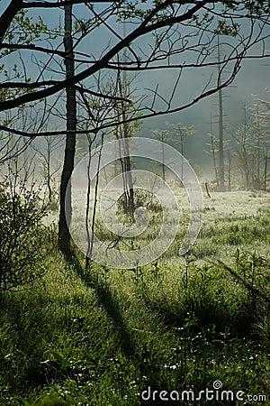 Morning Haze of Tashiro Wetland