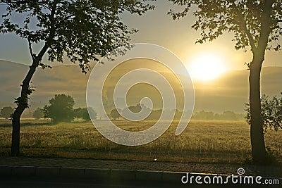 Morning landscape.