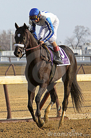 Morning Line Wins The Carter Handicap Editorial Stock Image