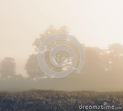 Morning mist,