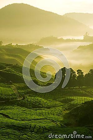 Free Morning Mist Stock Photo - 6682570