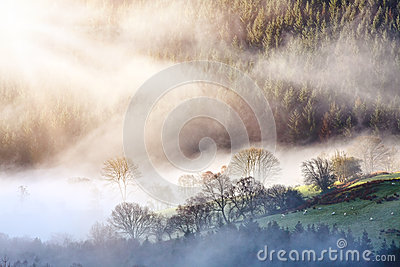 Morning mist forest landscape