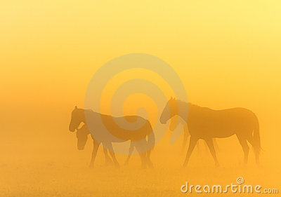Morning mist with horses