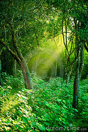 Morning sun in a misty rainforest