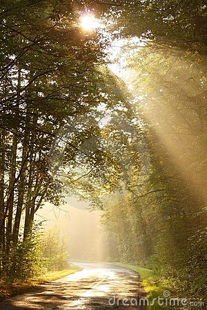 Morning sun rays fall on the forest road