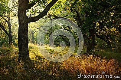 Morning Sunbeam