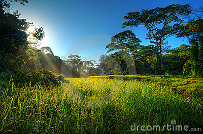 Morning sunbeams in nature landscape