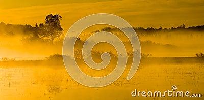 Morning Sunlight Bathes the Marsh