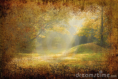 Morning sunrays falling on a forest glade