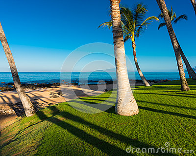 Morning on a Tropical Beach