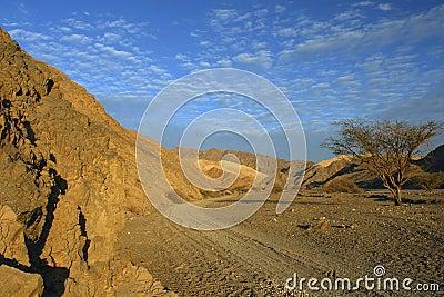 Morning view on the Negev desert, Israel