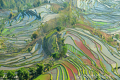 Morning of YuanYang Rice Terrace