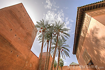 Morocco palm trees