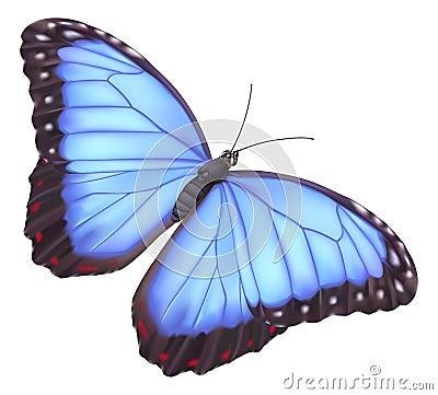 蓝色蝴蝶morpho