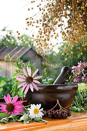 Free Mortar And Pestle With Healing Herbs Royalty Free Stock Photo - 15569115