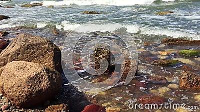 Morze Bałtyckie w Swietłońsku wiosną zbiory wideo