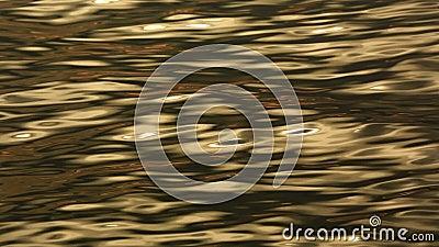 Morze Złote zbiory