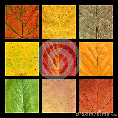 Mosaico com as nove veias coloridas das folhas