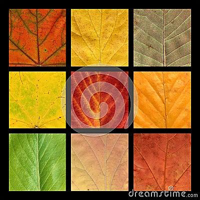 Mosaico con nueve venas coloreadas de hojas