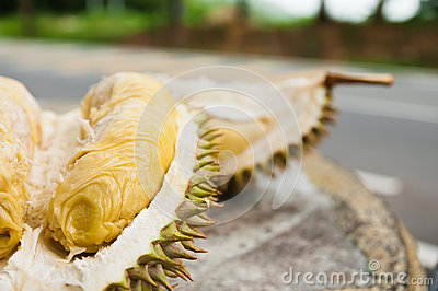Mosang King Durian Fruit