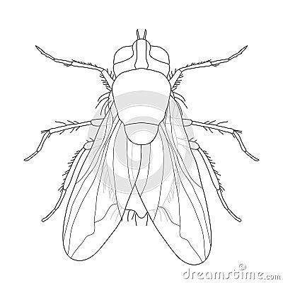 Mosca insetto di musca domestica una mosca realistica for Progettazione della costruzione domestica