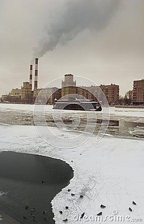 Moscow ducks