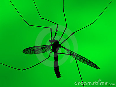 Mosquito on green background