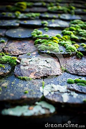 Free Moss Stock Image - 17179511