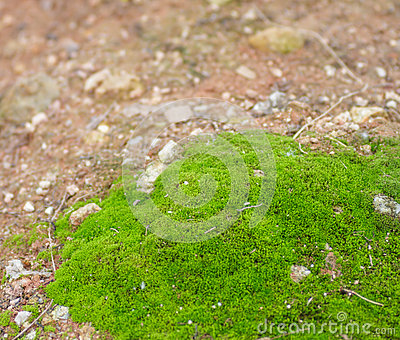 The moss.