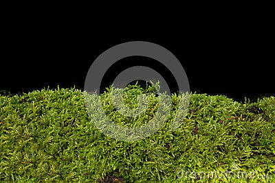 Moss against black background