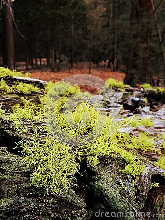 Free Moss And Lichen On Bark Of Fallen Tree In Forest Royalty Free Stock Images - 114998229