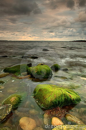 Moss covered stone in the sea