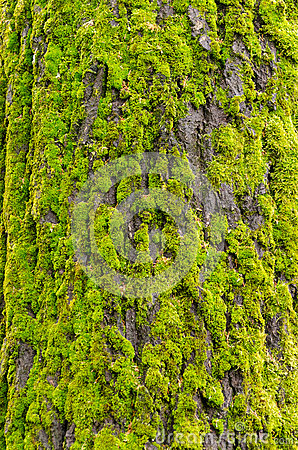 Moss-covered tree