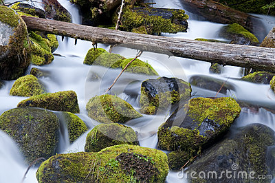 Moss Filled Boulders Fill Stream as Water Rushes By