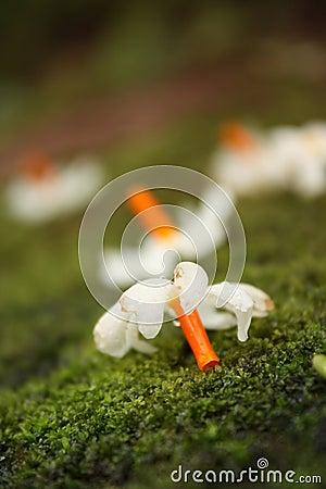Moss Flower